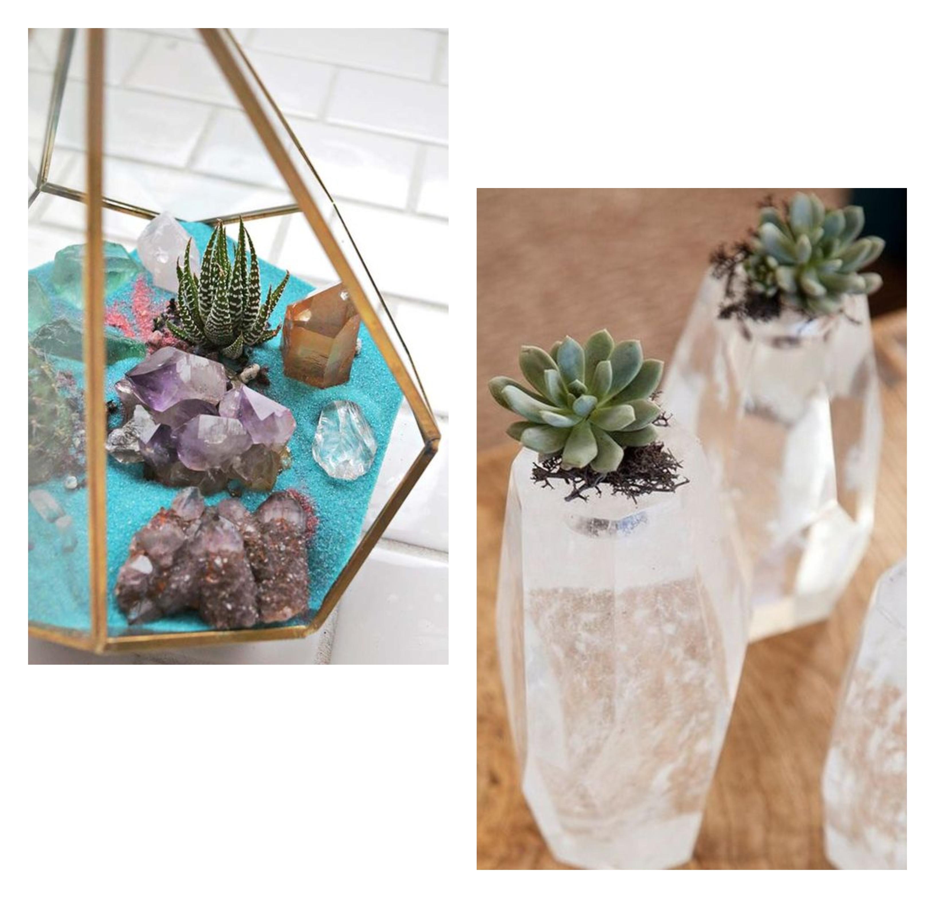 plantinhas e cristais